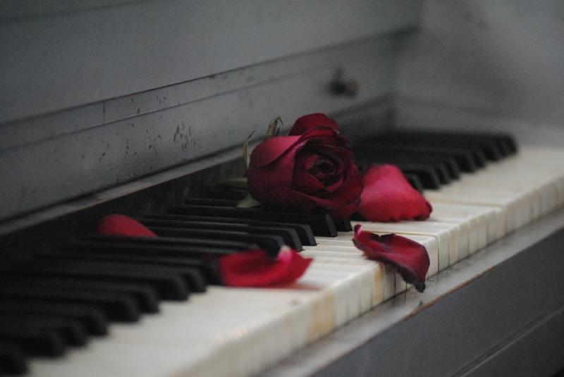 Amor no compartido rosa